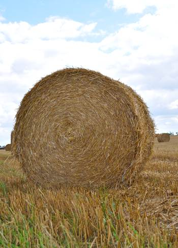 buy a bale for drought stricken farmers in australia